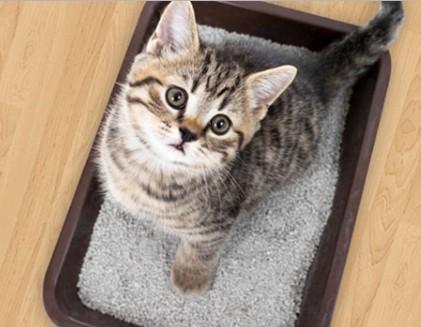 котенок на горшке