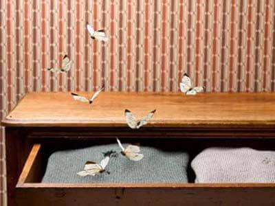 Одежная моль в квартире откуда берется