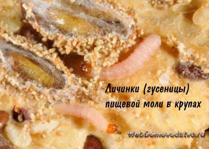 Зараженная пищевой молью крупа