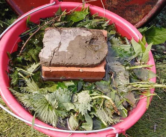 удобрение из крапивы в ведре