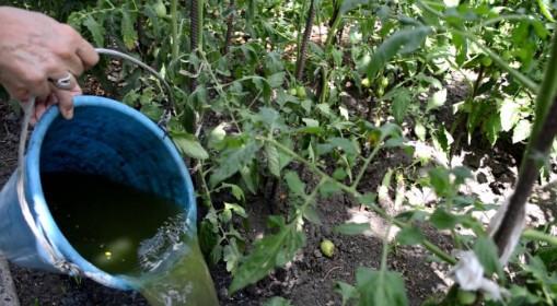 поливаем зеленым удобрением