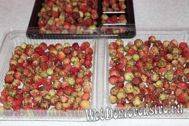 просушиваем ягоды