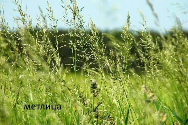 Как подготовить землю весной к посадкам: дачные секреты для ленивых