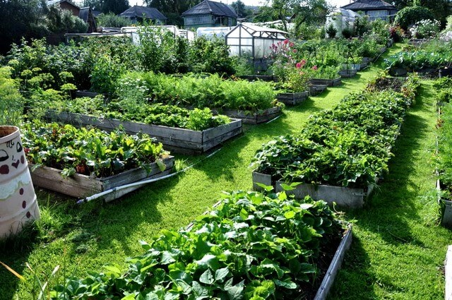 Как и чем правильно поливать и подкармливать огородные растения